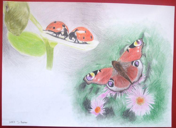 Frühling, Marienkäfer, Schmetterling, Zeichnung, Buntstiftzeichnung, Zeichnungen