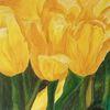 Licht, Schatten, Tulpen, Gelb