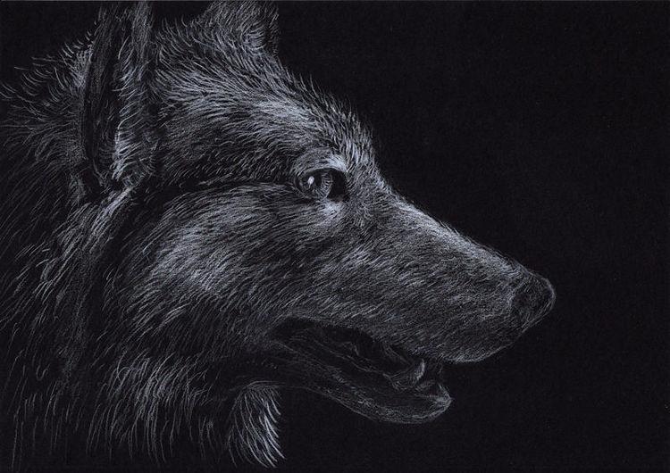 Wolf, Tiere, Buntstiftzeichnung, Natur, Museum, Zeichnungen
