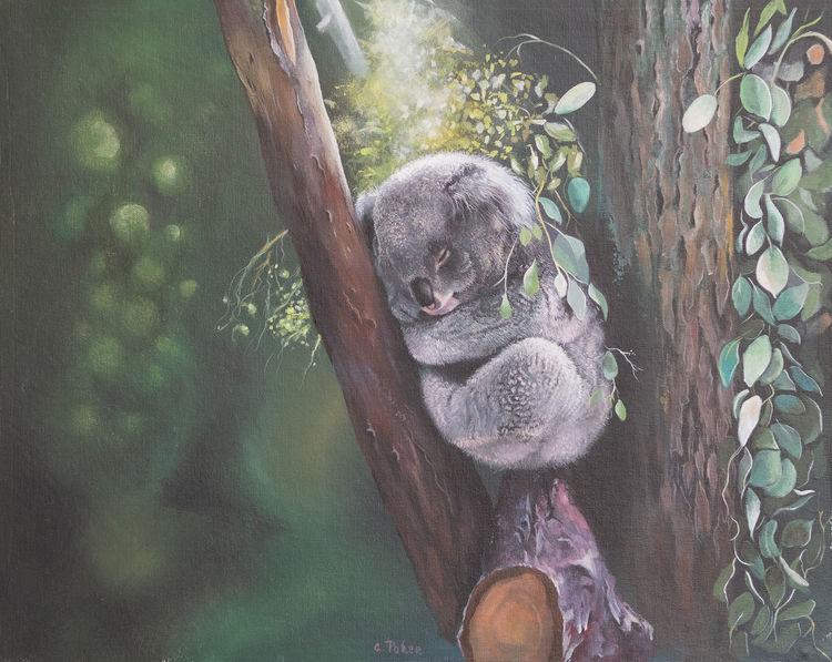 Eukalypthus, Australien, Zweig, Tiere, Äste, Koala