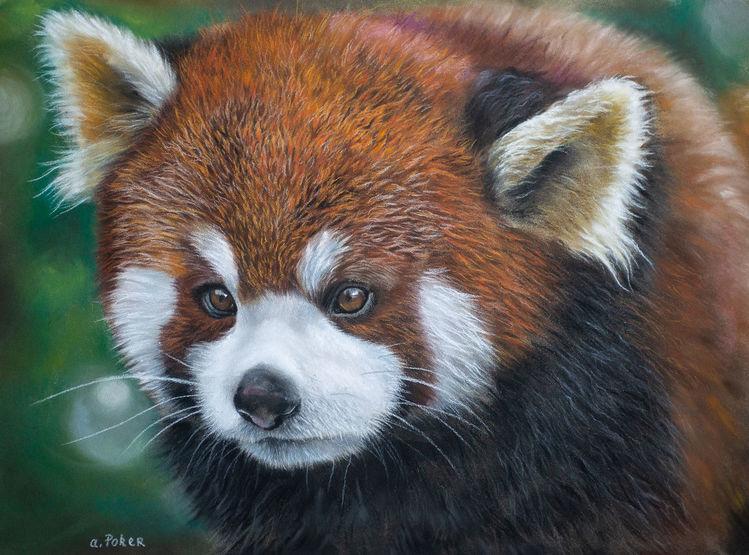 Flauschig, Tiere, Panda, Pastellmalerei, Tierwelt, Rot