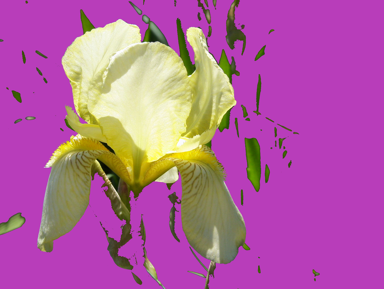 Iris, Zart, Leuchten, Digitale kunst