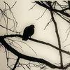 Natur, Vogel, Monochrom, Himmel