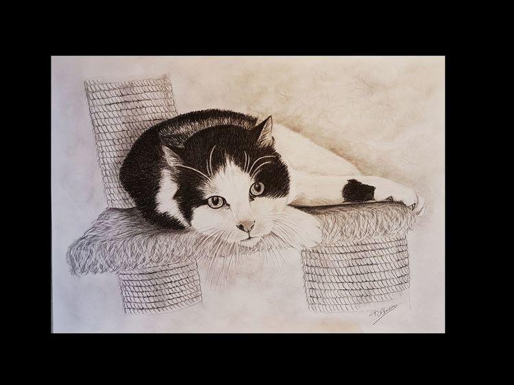 Schwarz, Katze, Portrait, Fell, Grafit, Zeichnung