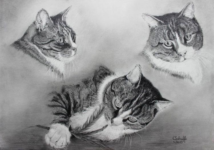 Studie, Katze, Bleistiftzeichnung, Kater, Spiel, Zeichnungen