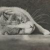 Liegend, Bleistiftzeichnung, Katze, Zeichnungen