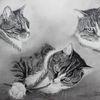Katze, Bleistiftzeichnung, Kater, Spiel