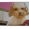 Tiere, Kleiner hund, Malerei,