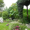 Garten, Fremd, Kaninchen, Fotografie