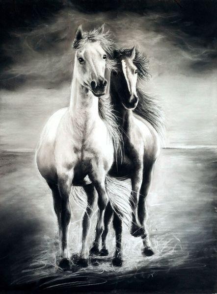 Schwarz, Weiß, Pferde, Pastells, Pferdeliebe, Freiheit