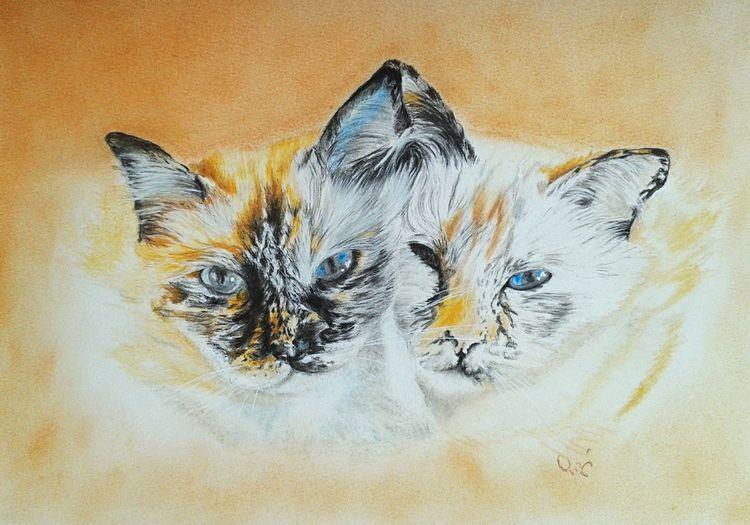 Katze, Buntstiftzeichnung, Kreide, Malerei
