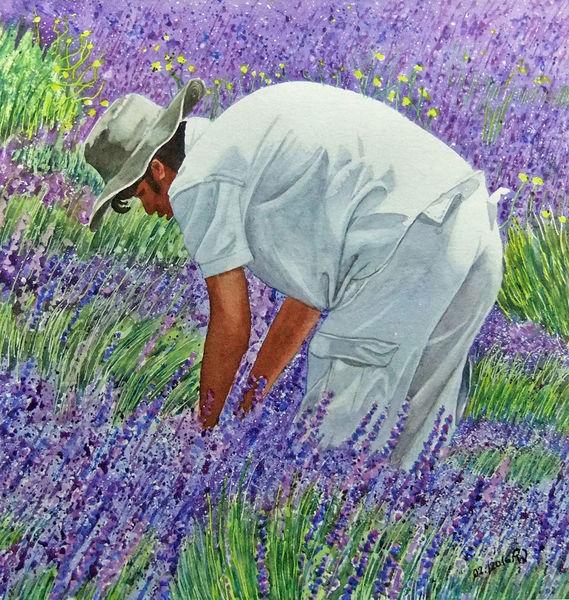 Ernte, Aquarellmalerei, Mann, Lavendel, Aquarell, Menschen