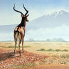 Afrika, Kilimandscharo, Savanne, Antilope