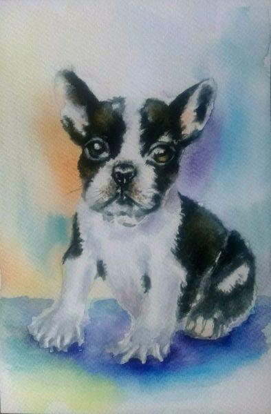 Bulldogge, Französische bulldogge, Hundeportrait, Orange, Aquarellmalerei, Aquarell tiere