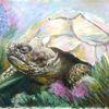 Schildkröte, Acrylmalerei, Blumen, Wiese