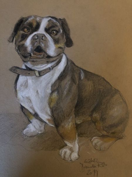 Hund, Pastellmalerei, Tiere, Skizze, Zeichnungen