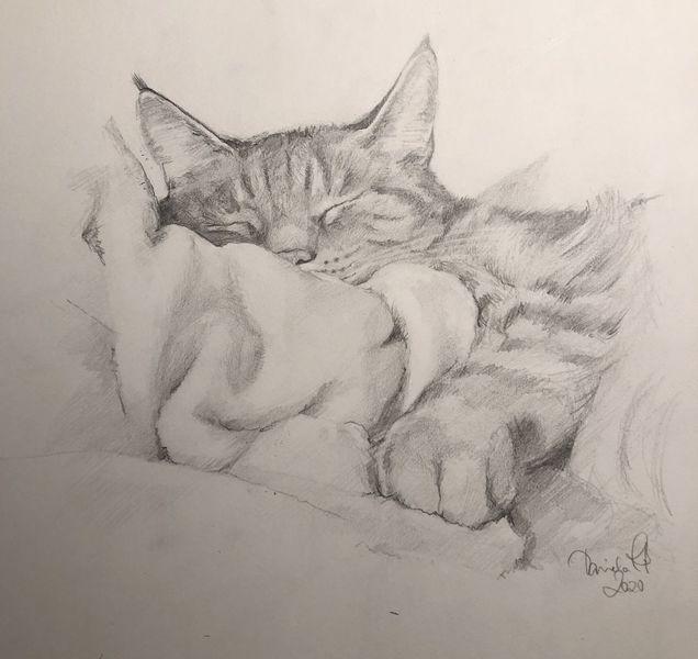 Tiere, Skizze, Katze, Zeichnen, Kater, Zeichnungen
