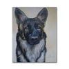 Portrait, Hund, Schatten, Figur
