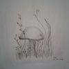 Pflanzen, Pilze, Natur, Bleistiftzeichnung