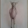 Bleistiftzeichnung, Reh, Natur, Kitz