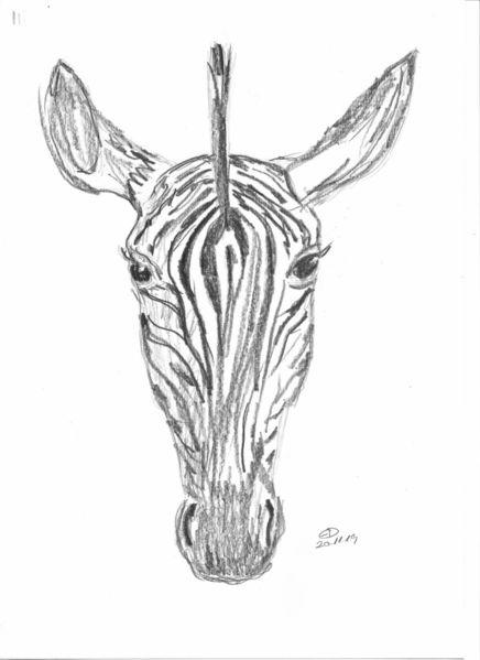 Zeichnung, Zebra, Kopf, Zeichnungen
