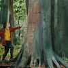 Wald, Natur, Malerei, Annäherung