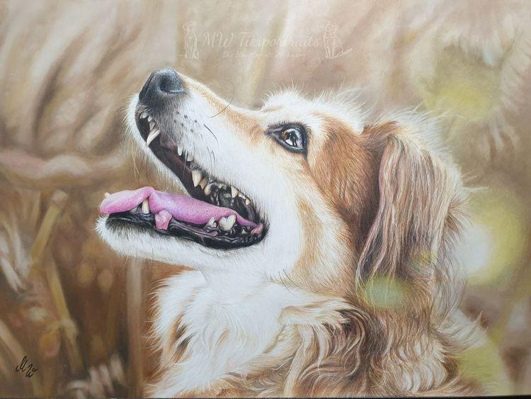 Buntstifte, Tierportrait, Zeichnen, Tierzeichnung, Polychromos, Buntstiftzeichnung
