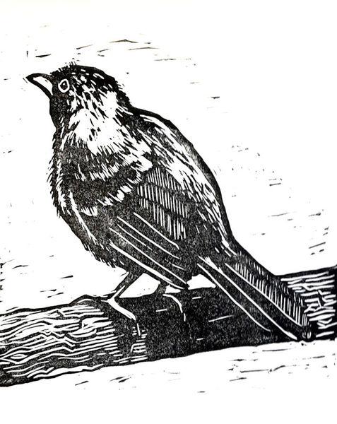 Vogel, Tiere, Linolschnitt, Drossel, Druckgrafik