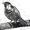 Vogel, Tiere, Linolschnitt, Drossel