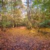 Geographie, Tegel, Herbstmotiv, Natur