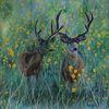 Acrylmalerei, Geweih, Frühling, Wildtiere
