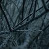 Schwarz, Winter, Nebel, Busch