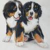 Hund, Zwillinge, Welpe, Hundeportrait
