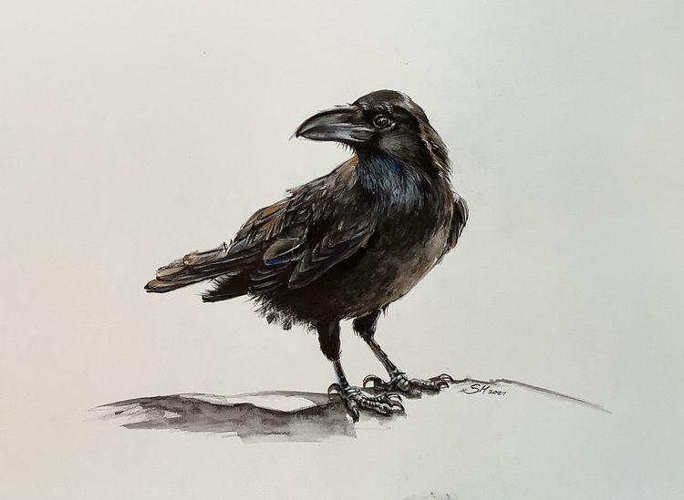 Rabe, Tuschmalerei, Vogel, Aquarellmalerei, Tiere, Krähe