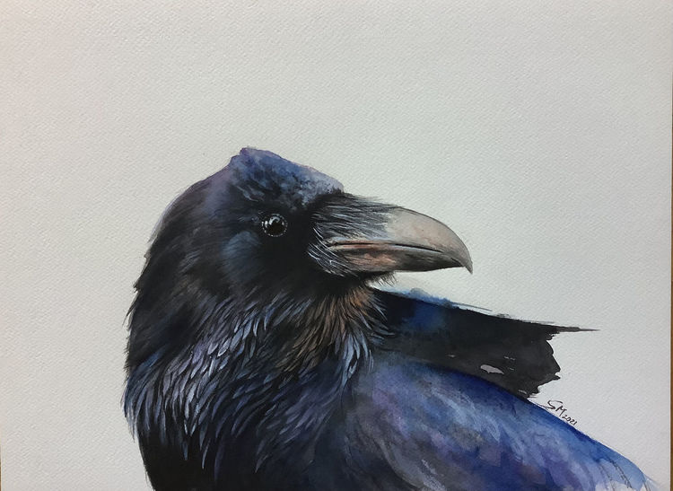 Krähe, Vogel, Tiere, Aquarellmalerei, Aquarell