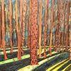 Wald, Schatten, Darßwald, Waldboden