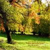 Farben, Text, Baum, Licht