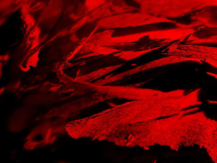 Rinde, Makrofotografie, Rot, Kunstwerk, Schubertj73, Fotografie