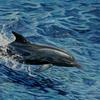Ozean, Wasser, Delfin, Atlantik