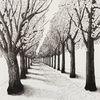 Baum, Jahreszeiten, Allee, Straße