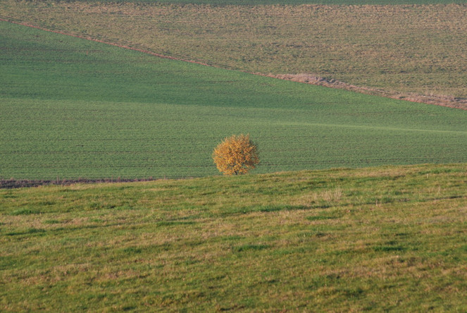 Wiese, Weide, Baum, Fotografie