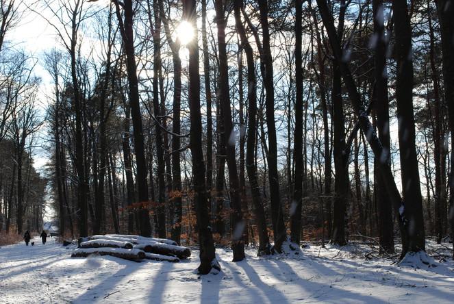 Winterlandschaft, Winter, Fotografie