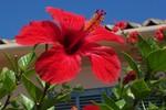 Rot, Blumen, Fotografie