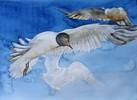 Warnemünde, Maritim, Aquarellmalerei, Möwe
