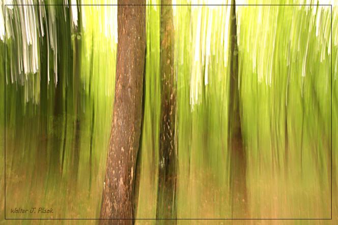 Wald, Baum, Grün, Lichtmalerei, Lightpainting, Frühling