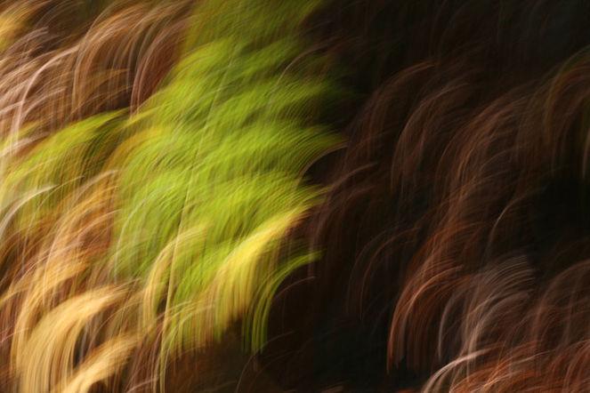 Wischeffekt, Lichtmalerei, Lightpainting, Farne, Verwischen, Fotografie