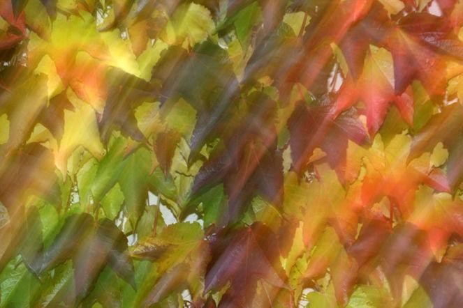 Verwischen, Wischeffekt, Lichtmalerei, Herbstlaub, Lightpainting, Herbst