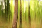Frühling, Wald, Baum, Grün