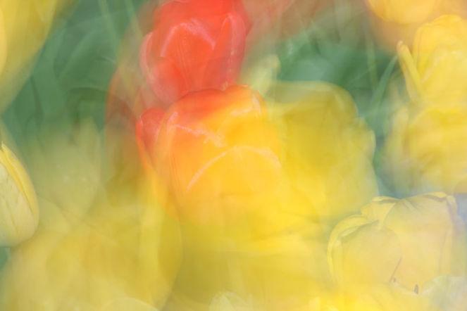 Tulpen, Lichtmalerei, Lightpainting, Blumen, Wischeffekt, Verwischen