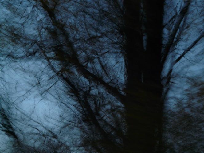 Stamm, Zweiggespinst, Baum, Dunkel, Digitale kunst, Zyklus